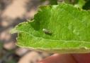 Lombosfa fehérmoly