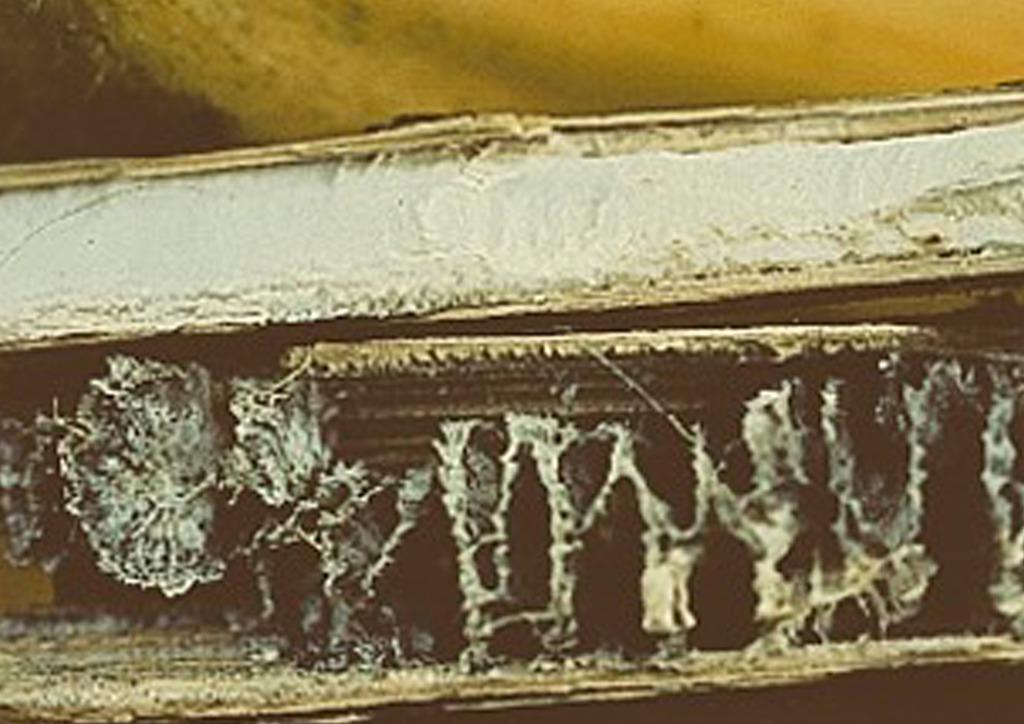 Bélrészben kialakuló szkleróciumok
