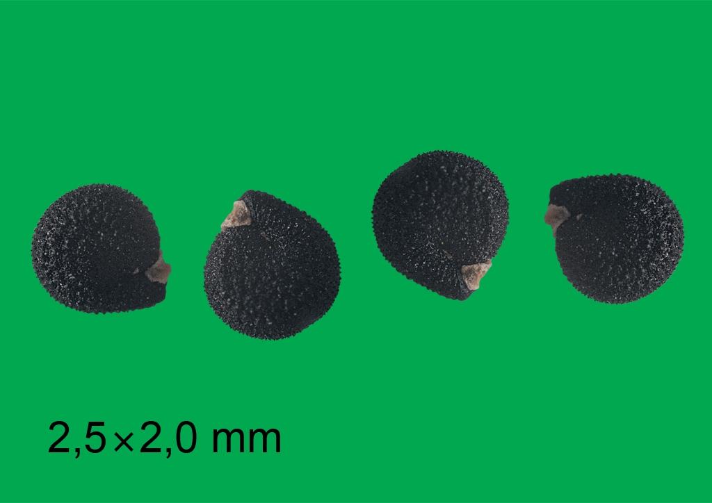 Portulaca oleracea - mag