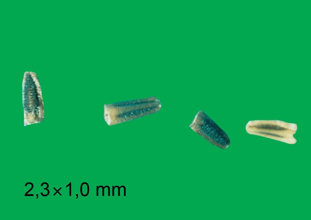 Matricaria inodora - mag