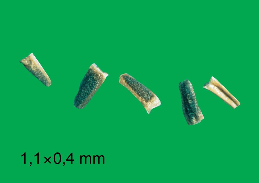 Matricaria chamomilla - mag
