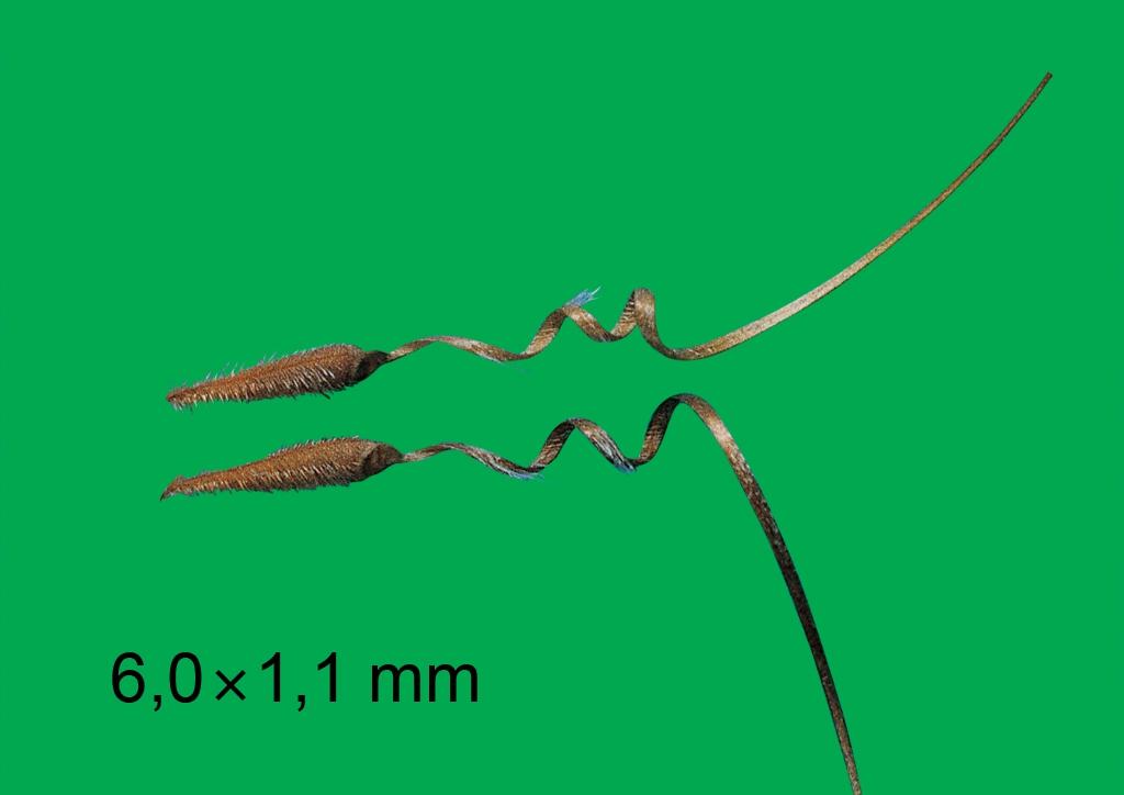 Erodium cicutarium - mag