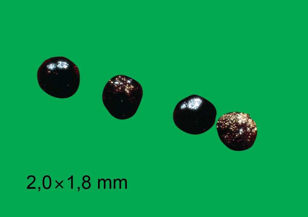 Chenopodium hybridum - mag