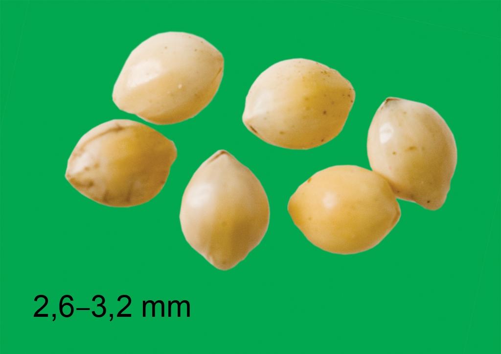 Panicum miliaceum - mag