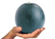 Görögdinnye (zárt termesztőberendezésben, hajtatott)